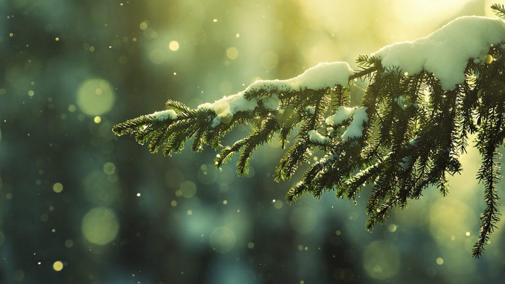sadhana-navidad-emergencia-luz
